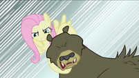 Fluttershy about to break bear's neck S2E03