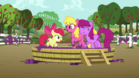Apple Bloom and ponies stomping on a tub of grapes S6E4
