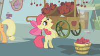 Apple Bloom looks up at an apple S1E12