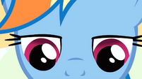 Closeup on Rainbow Dash's face while she is reading S2E16