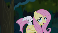 Fluttershy and Angel in Everfree Forest S4E03
