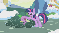 Twilight trying to shake Spike awake S1E11