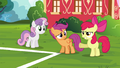 "Apple Bloom ""she gets so much attention without"" S4E15.png"