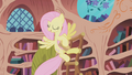Fluttershy cleaning Twilight's library S01E03.png