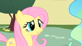 Fluttershy in front of Princess Celestia S1E22.png