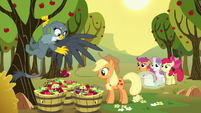 Gabby helping Applejack pick apples S6E19