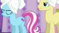 Goldengrape and Earth mare waiting impatiently S6E10.png