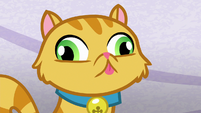 Goldie Delicious' cat with a blank stare S8E5