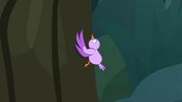 Little bird climbing a tree S8E13