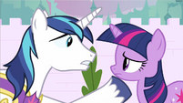 Shining Armor need to see S2E25