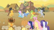 Fiesta Appleloosa