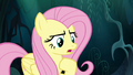 """Fluttershy """"you can come back with me"""" S6E11.png"""