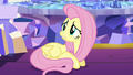 """Fluttershy """"we're all a little guilty"""" S5E3.png"""
