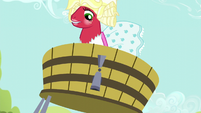 Orchard Blossom falls into grape trough S5E17