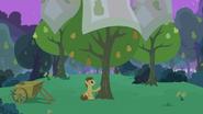 S07E13 Grand Pear okrywa swoje drzewa kocami