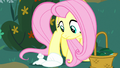 Angel falls over flat at Fluttershy's hooves S8E18.png