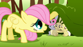 Filly Fluttershy calming the scared rabbits down S1E23.png
