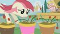 Rose Flower Pots S01E04.png