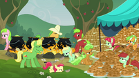 Apple family stops making fritters S3E8