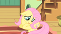 """Fluttershy """"maybe I shouldn't go"""" S01E22.png"""