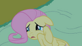 Fluttershy frightened on the ground S2E04.png