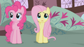 Fluttershy looking up at the mountain S1E07.png