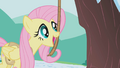 Fluttershy using bells strung on a rope S1E11.png