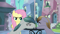 Fluttershy creeping behind locals S3E1.png