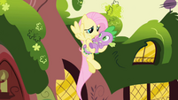 Hovering Fluttershy holding Spike S01E01