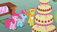 S02E24 Pinkie i państwo Cake koło tortu