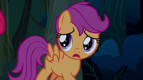 "Scootaloo ""what are you saying?"" S5E6"
