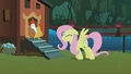 Fluttershy scaring the chickens S01E17.png