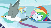 Bird flapping past Rainbow Dash EGROF