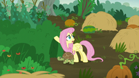 Fluttershy --this fight is really affecting the animals-- S5E23