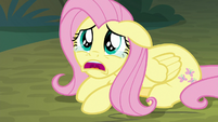 "Fluttershy ""everycreature is mad at me!"" S8E13"