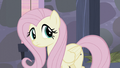 Fluttershy confused S5E02.png
