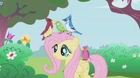 Fluttershy with birds S01E03