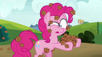 Pinkie looking at seed pods in her hooves S7E4