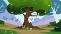 Rainbow Dash Tree S2E07.png