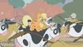 Applejack riding a cow S01E04.png