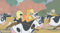 Applejack riding a cow S01E04