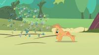 Applejack rounding up some parasprites S1E10