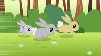 Rabbits running away S1E23