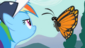 "Rainbow Dash ""Can't hear you"" S2E07.png"