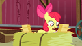 Apple Bloom reads the replies S3E08.png