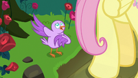 Bird tweeting to Fluttershy for help S8E13