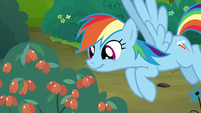 Rainbow Dash looking at red berries S7E16