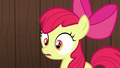 Apple Bloom in deep surprise S6E14.png
