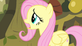 Fluttershy 'I'd do anything for the animals!' S4E14.png