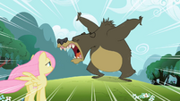 Fluttershy Bear Growl S2E3